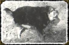 Chipper giving himself a good scratch