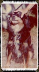 Chipper Lane