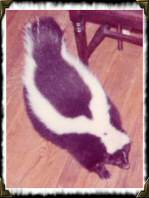 Spartacus the obese skunk